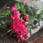 おみやげの薔薇