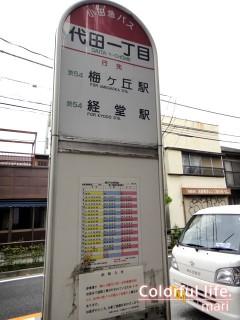 120725_root_shibu4_DSC05249