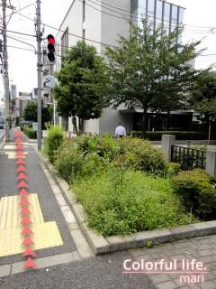 120727_root_simokitazawa10-2_DSC05235