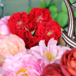 ベランダ薔薇の花摘み