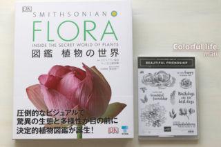 FLORA 図鑑 植物の世界(大きさ比較)