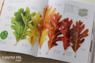 FLORA 図鑑 植物の世界(中をチラ見せ)