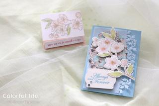 桜のカードセット(横:フォーエバー・ブロッサム)