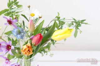 お花の定期購入/ピュアフラワー(3月2回目-2)