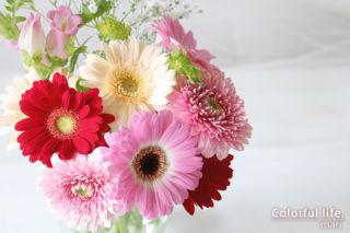 お花の定期購入/ピュアフラワー(2021年4月1回目-2)
