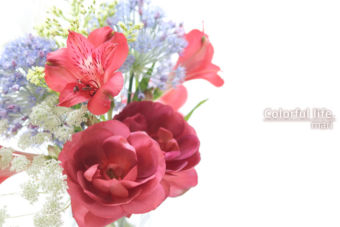 オールドローズの次はミニバラ♪薔薇の季節を満喫中