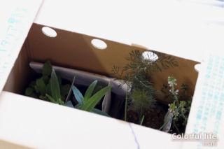 梱包箱(ポタジェガーデン/2021年4月)